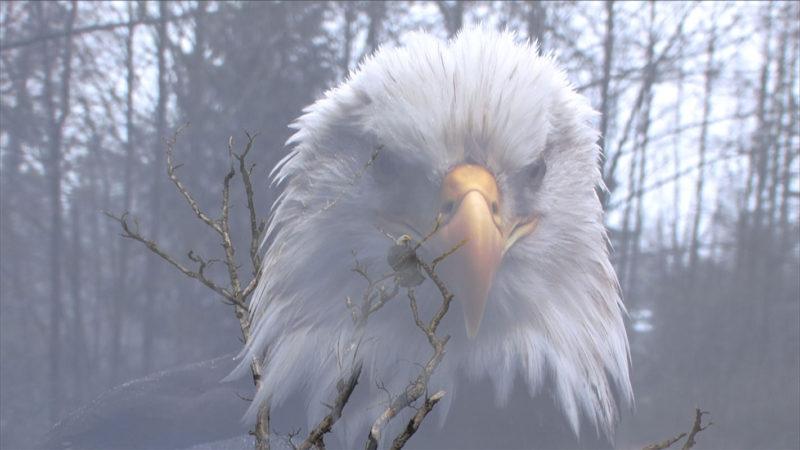 Eagle Skyworld